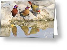 Colorful Birds From Africa Greeting Card