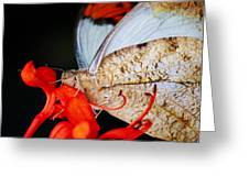 Colorful Portrait Of A Butterfly  Greeting Card