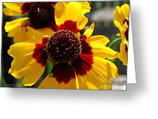 Coreopsis Or Golden Tickseed Greeting Card