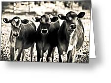 3 Curious Cows Greeting Card