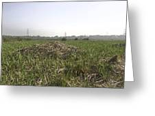 Cut And Dried Grass Along With Growing Grass Greeting Card