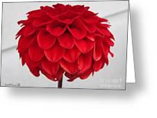 Dahlia Named Ali Oop Greeting Card