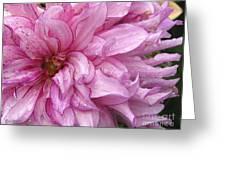 Dahlia Named Annette C Greeting Card