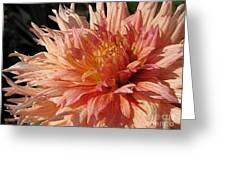 Dahlia Named Intrepid Greeting Card