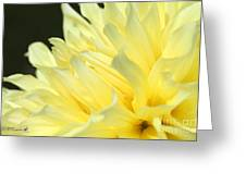 Dahlia Named Kelvin Floodlight Greeting Card