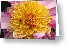 Dahlia Named Lambada Greeting Card