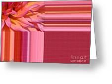 Dahlia Named Oreti Lass Greeting Card