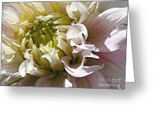Dahlia Named Strawberry Ice Greeting Card