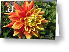 Dahlia Named Swan's Sunset Greeting Card