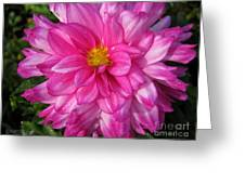 Dahlia Named Who Dun It Greeting Card