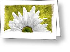 3 Daisies  Greeting Card