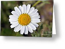 Daisy Flower Greeting Card by George Atsametakis