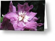 Delphinium Named Magic Fountains Lilac Pink Greeting Card