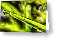 Dew On Grass Greeting Card by Thomas R Fletcher