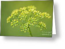 Yellow Dill Flower Greeting Card