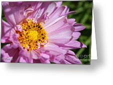 Double Click Cosmos Named Rose Bonbon Greeting Card