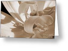 Double Late Tulip Named Angelique Greeting Card