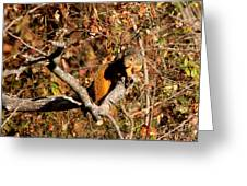 Eastern Fox Squirrel Greeting Card