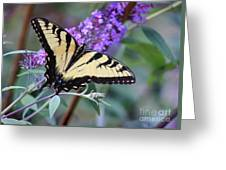 Eastern Tiger Swallowtail Butterfly On Butterfly Bush Greeting Card