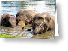 3 Elephants Greeting Card