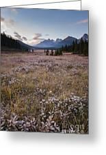 Engadine Meadow Greeting Card