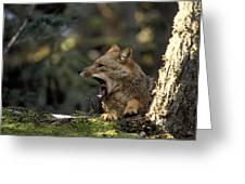 Environmental Woes Of Tierra Del Fuego Greeting Card