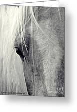 Equine Study Greeting Card