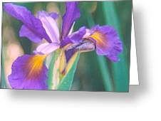 Exotic Iris Greeting Card