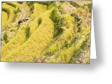Farmers At Rice Field Greeting Card