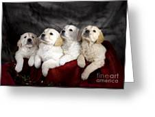 Festive Puppies Greeting Card