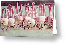 Flamingos On Lake In Andes Greeting Card