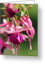 Fuchsia Named Lambada Greeting Card