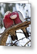 Galahs Greeting Card