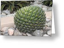 Garden Cactus Greeting Card