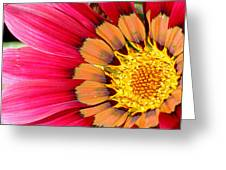 Gazania Greeting Card by Borislav Marinic