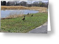 3 Geese Greeting Card