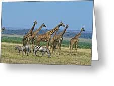 Girafe Masai Giraffa Camelopardalis Greeting Card