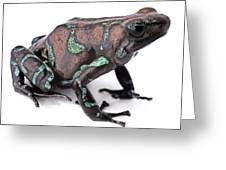 Golden Poison Dart Frog Greeting Card