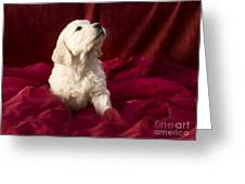 Golden Retriever Puppy Greeting Card