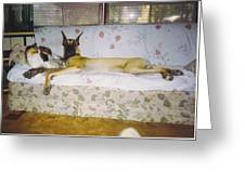 Great Dane And Calico Cat Greeting Card