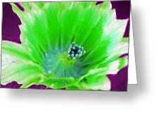 Green Cactus Flower Greeting Card