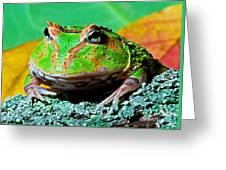 Green Fantasy Frogpacman Frog Greeting Card