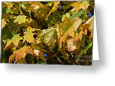 Green Tree Greeting Card by ELITE IMAGE photography By Chad McDermott