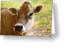 Happy Cow Greeting Card