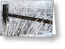Hoar Frost On The Fence Greeting Card