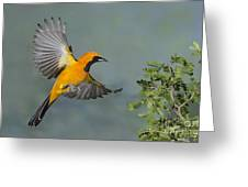 Hooded Oriole Greeting Card