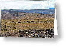 3 Horses At 4 Corners Greeting Card