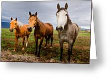 3 Horses Greeting Card
