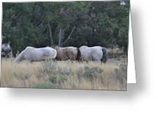 3 Horses Greeting Card