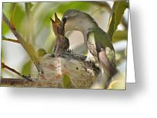 Hummingbird Babies Greeting Card by Old Pueblo Photography